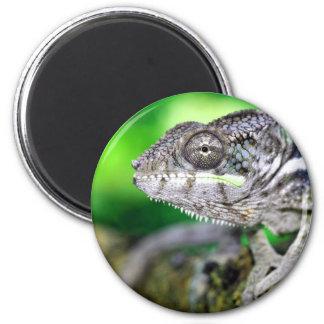 panther chameleon magnet
