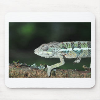panther chameleon mouse pad