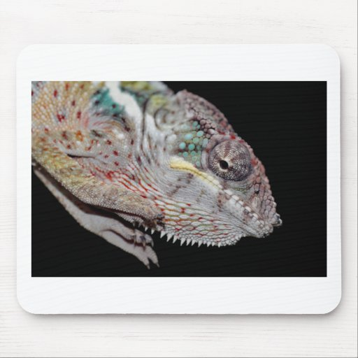panther chameleon mouse pads