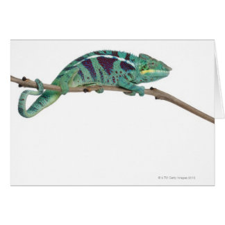 Panther Chameleon Nosy Be (Furcifer pardalis) Greeting Card