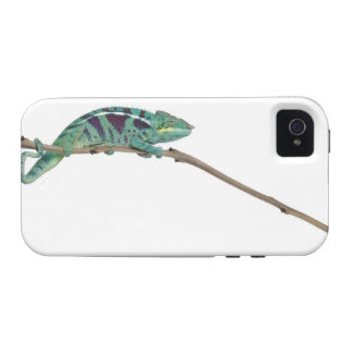 Panther Chameleon Nosy Be (Furcifer pardalis) Vibe iPhone 4 Cases