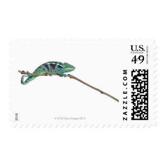 Panther Chameleon Nosy Be (Furcifer pardalis) Postage