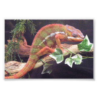 Panther Chameleon Photo Art