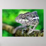 panther chameleon print
