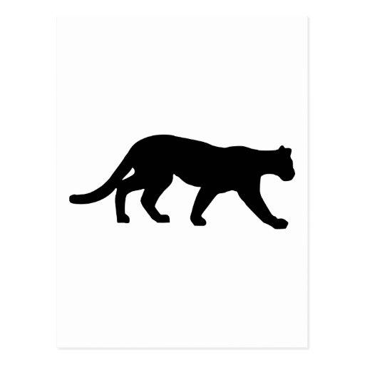Panther - Cougar Postcard