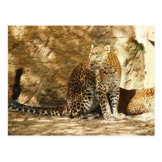 Panther of Sri Lanka Postcard
