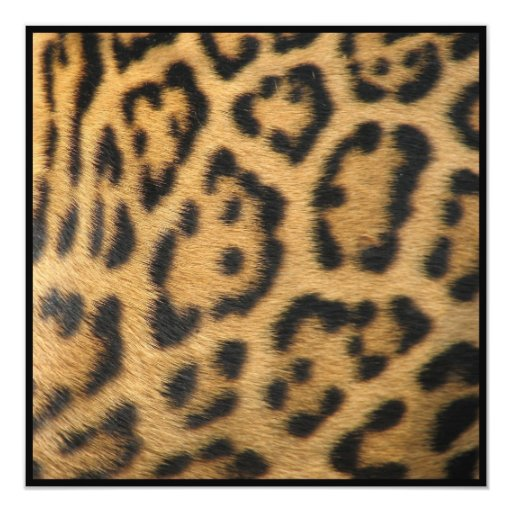 "Panther Pattern Invitation 5.25"" Square Invitation Card"