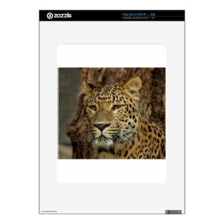 Panther Stalking Decal For The iPad