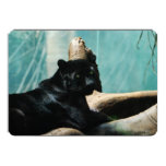 Panther with Piercing Eyes 5x7 Paper Invitation Card