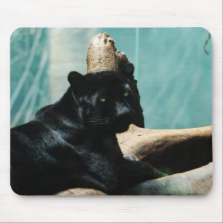 Panther with Piercing Eyes Mouse Pad