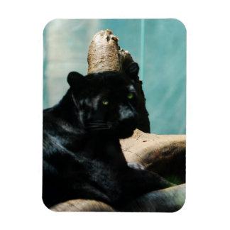 Panther with Piercing Eyes Rectangular Photo Magnet