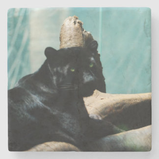 Panther with Piercing Eyes Stone Coaster