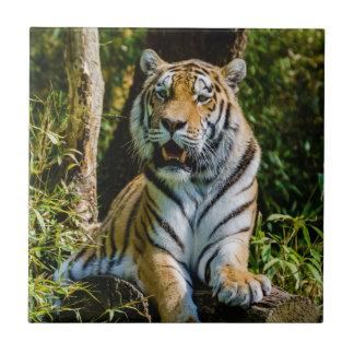 Panthera el Tigris Altaica del tigre de Amur del t Azulejo Cuadrado Pequeño