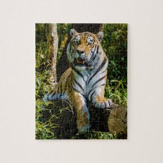 Panthera el Tigris Altaica del tigre de Amur del t Rompecabeza Con Fotos