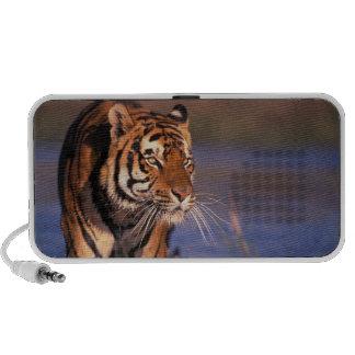 Panthera el Tigris del tigre de Asia, de la India, iPhone Altavoz