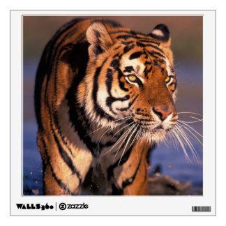 Panthera el Tigris del tigre de Asia, de la India,