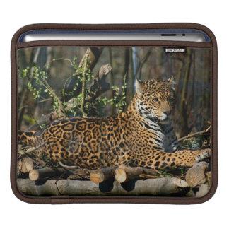 Panthera Jaguar iPad Sleeve
