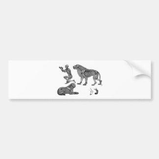 Panthera Leo - Skeleton Lions In Repose Bumper Sticker