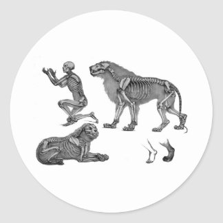 Panthera Leo - Skeleton Lions In Repose Classic Round Sticker