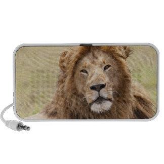 Panthera masculino leo) que descansa, Masai Mara d Altavoz De Viaje