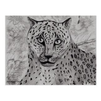 Panthera Onca Postcard