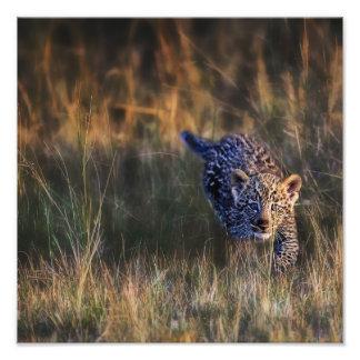 Panthera Pardus de Cub del leopardo) como se ve en Impresion Fotografica