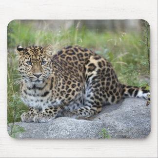 Panthera pardus orientalis mouse pad