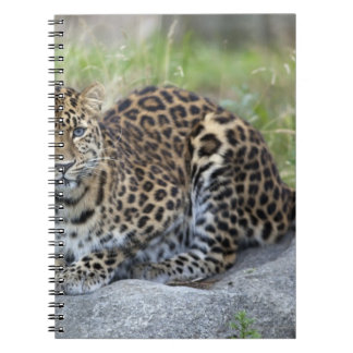 Panthera pardus orientalis notebook