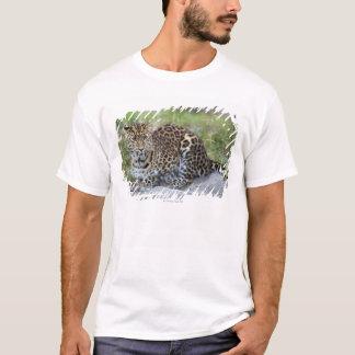 Panthera pardus orientalis T-Shirt