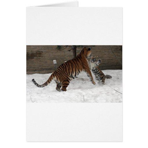 Panthera_tigris_altaica_30_-_Buffalo_Zoo Card