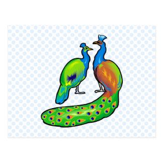 Paola & Paolo Peacock Postcard