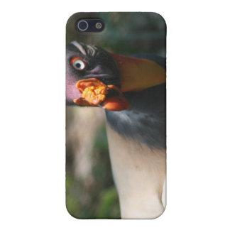 Papá de Sarcoramphus del primer del pájaro de rey  iPhone 5 Funda
