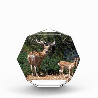 Papa Deer Protects Baby Fawn Acrylic Award