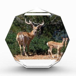 Papa Deer Protects Baby Fawn Award