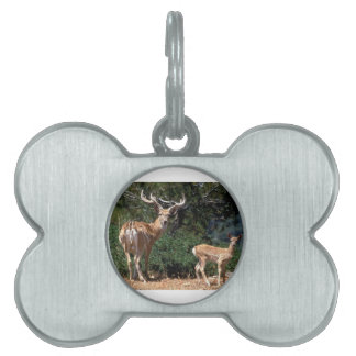 Papa Deer Protects Baby Fawn Pet Name Tag