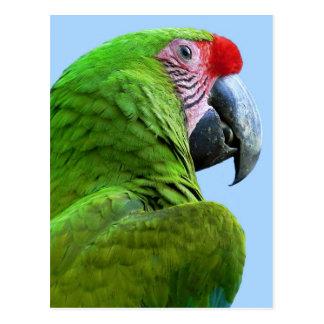 Papagayo - tarjeta postal