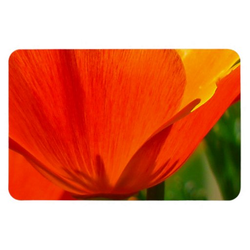 Papaver anaranjado Nudicaule de la amapola de Isla Imanes De Vinilo