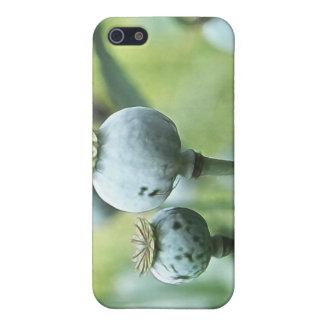 Papaver - cabezas de la semilla del somniferum iPhone 5 funda