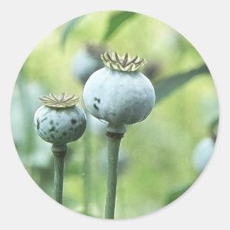 Papaver - cabezas de la semilla del somniferum pegatina redonda
