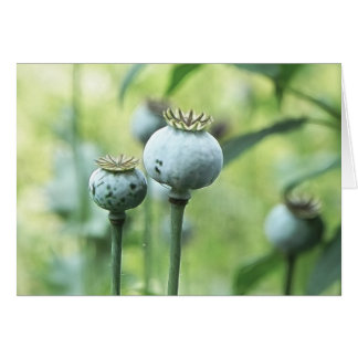 Papaver - cabezas de la semilla del somniferum tarjeta de felicitación