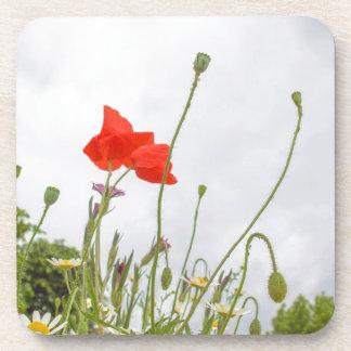 Papaver flower coaster