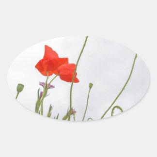 Papaver flower oval sticker