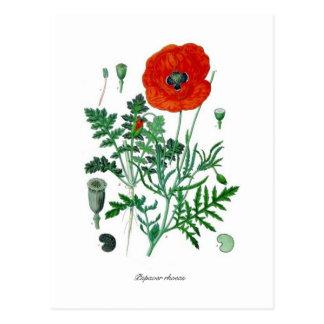 Papaver rhoeas postcard