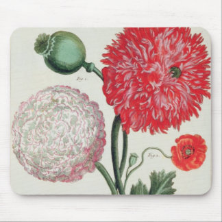 Papaver somniferum and Papaver rheas engraved by G Mouse Pad