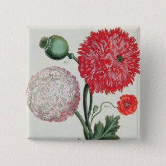 Papaver somniferum and Papaver rheas engraved by G Pinback Button