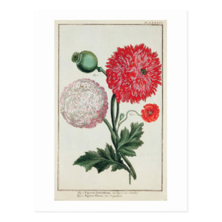 Papaver somniferum and Papaver rheas engraved by G Postcard