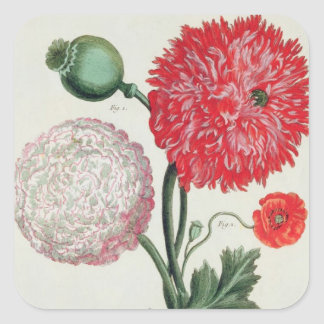 Papaver somniferum and Papaver rheas engraved by G Square Sticker