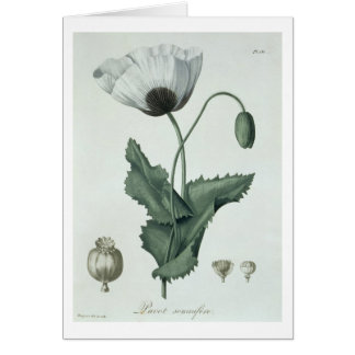 Papaver Somniferum from 'Phytographie Medicale' by Card