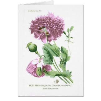 Papaver somniferum (Opium Poppy) Card