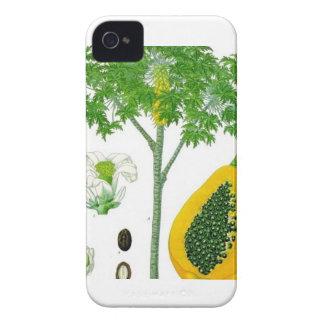 Papaya iPhone 4 Carcasa